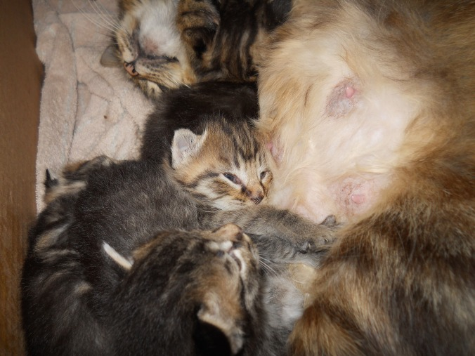 Gizmo with kittens