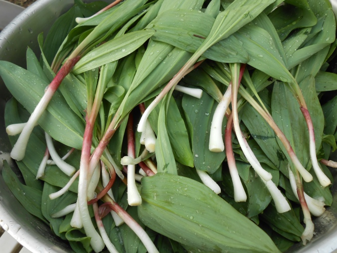 a big ass bowl of RAMPS...all cleaned up!
