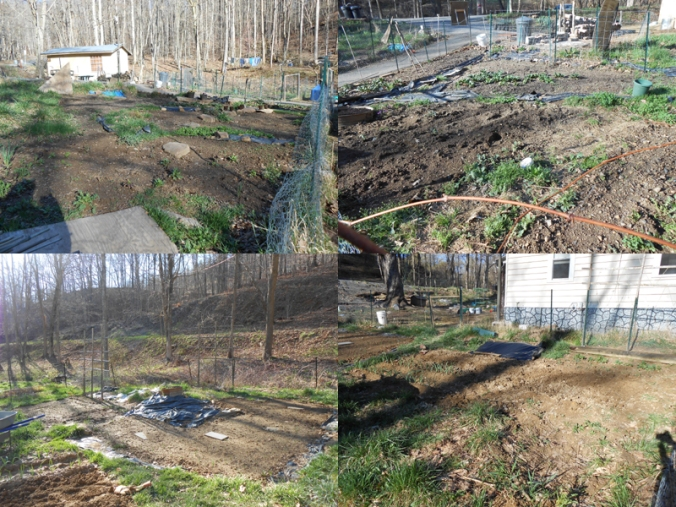 here are pictures of some of the garden plots that I worked on yesterday