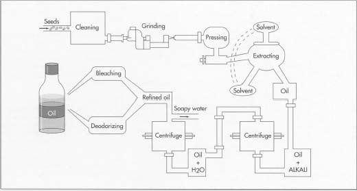 graphic depicting the multi-step industrial process used to create vegetable oil, and remember the oil is heated to 450 degrees Fahrenheit during this process which is why deodorizing is the final step, so that you can't taste that it's rancid...ewwwwwww