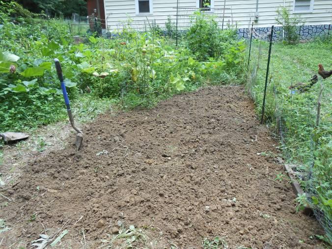 freshly dug