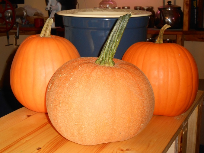 Winter Luxury Pie Pumpkin in the middle and Connecticut Field Pumpkins on either side
