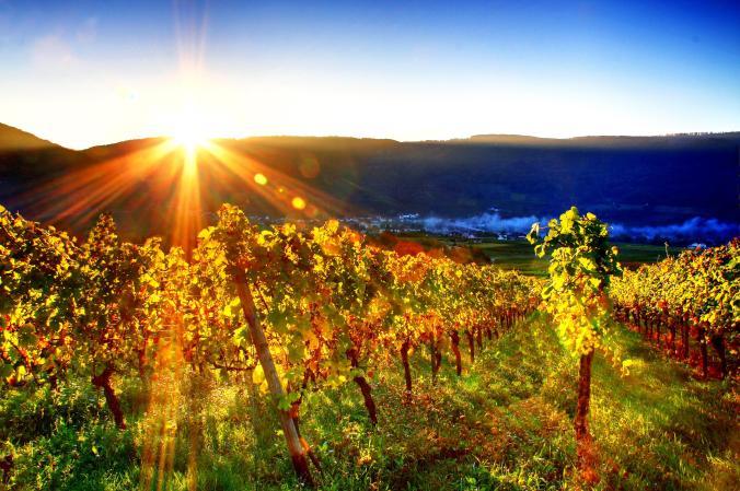 6794800-free-vineyard