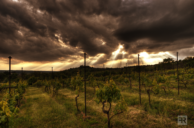 stormy_vineyards_by_filipr8-d66xa5y