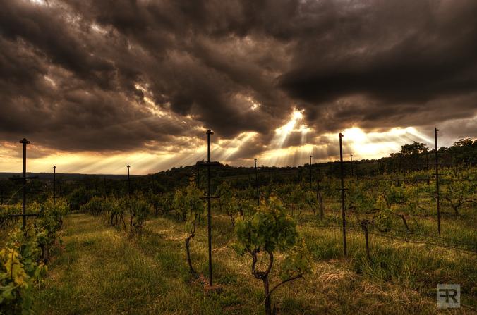 stormy_vineyards_by_filipr8-d66xa5y